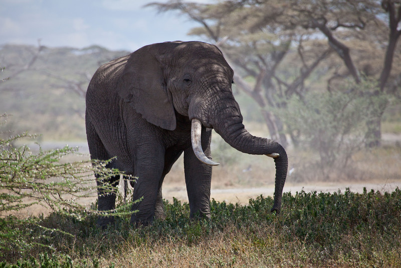 Elephant (41 of 49)
