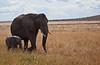 Elephant (33 of 49)