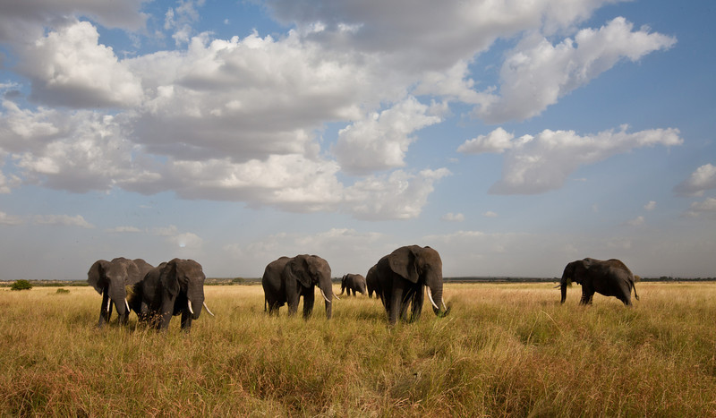 Elephant (13 of 49)
