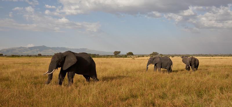 Elephant (17 of 49)