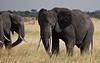 Elephant (7 of 49)