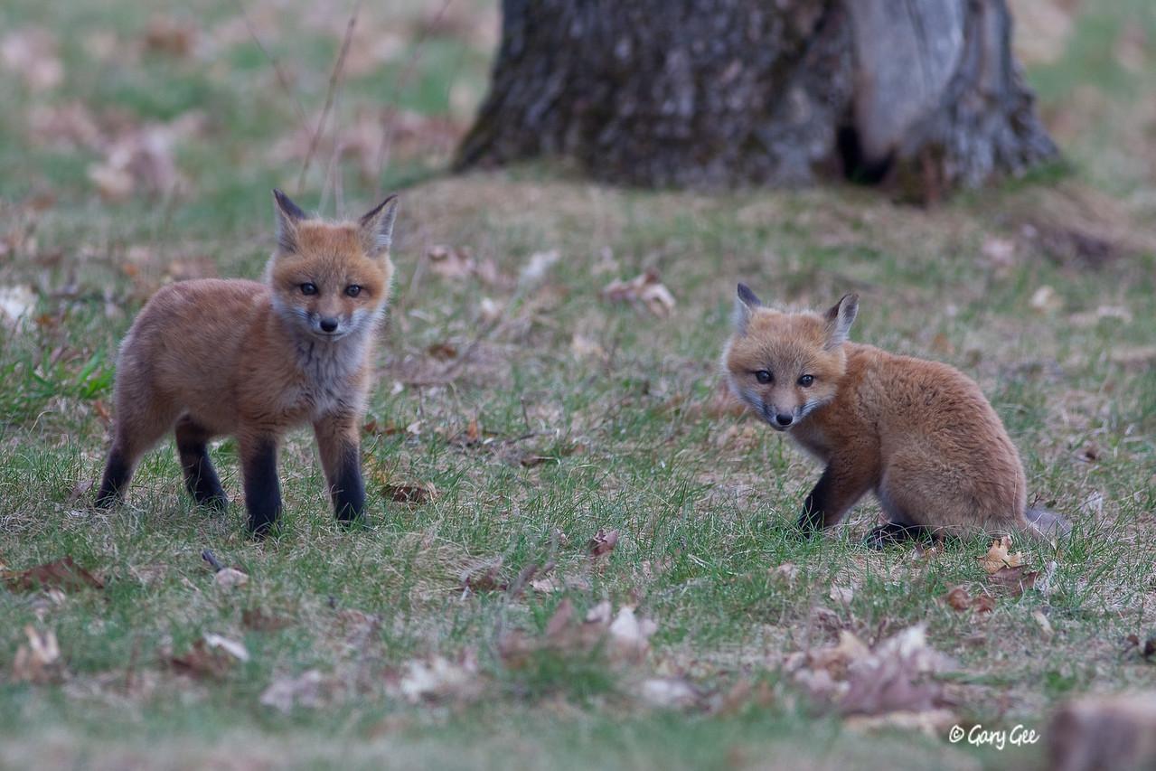 aaaawww....aren't they cute?!