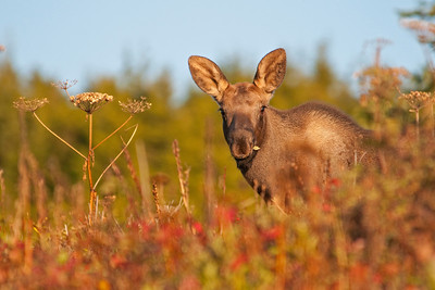 Chugach State Park, AK