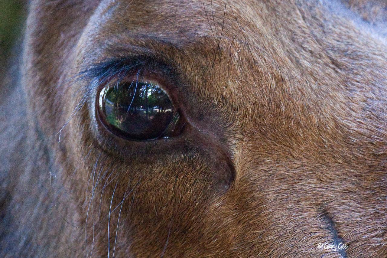 """In the Eye of the Moose"", Presque Isle, Marquette, MI"