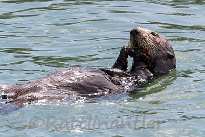 3/25/2014 Moss Landing Monterey Bay, California