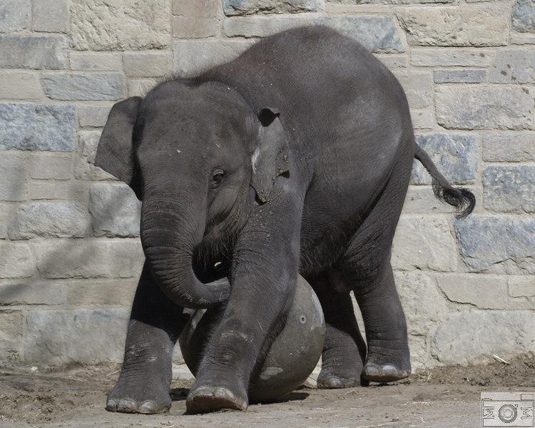Baby Elephant Pilates