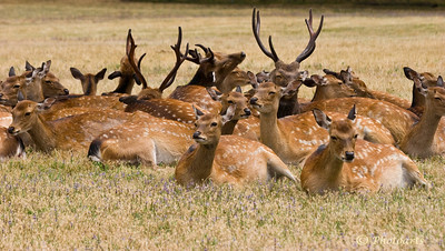 """Group Hug"" Number of Deer huddled together was captured in Central Oregon. #81070799  © Payam Nashery - Photoarts"