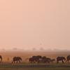 Elefanten und Zebras im Abendlicht, Chobe Nationalpark, Botswana, Chobe National Park, Nationalpark, Okavango Delta, Botswana, Botsuana