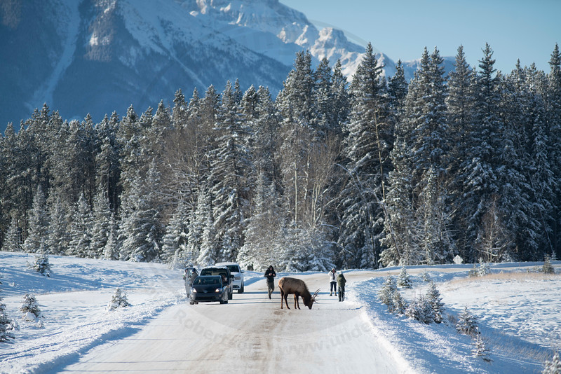 Tourist's Gather, Banff National Park