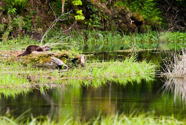 """Beaver Pond"""
