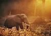 Elephant1_131217-metalprint_A3_2