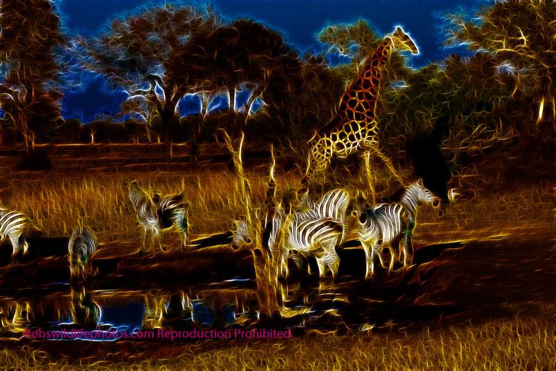 Zebara and Giraffe