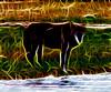 wolf in elk park