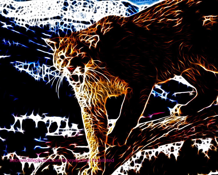 Cougar Montana 2007_0056c