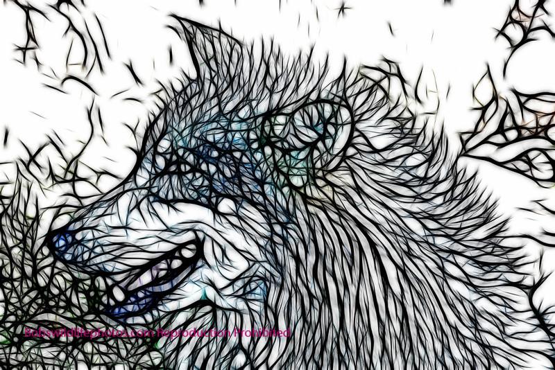 Unknown wolf 2