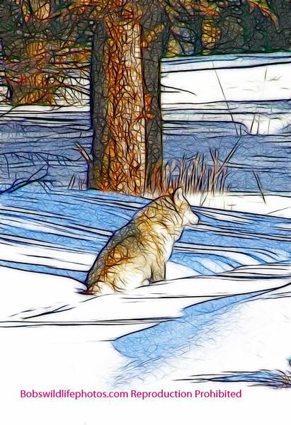 Grey wolf near hell roaring (1a)