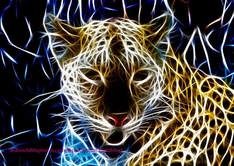 This large male leopard was teken in Sabi Sands.