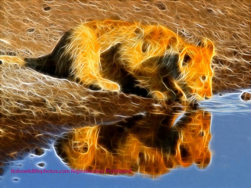 Lion Etosha 2011_0057 4-6a
