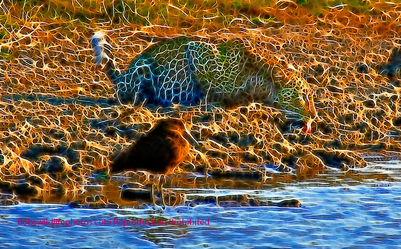 Leopard and hammerkop