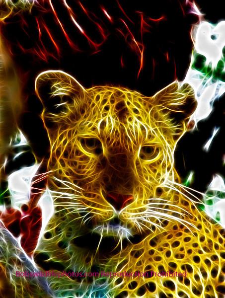 Leopard Sabie Sands 2011_0020a