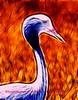 Blue Crane with Flames