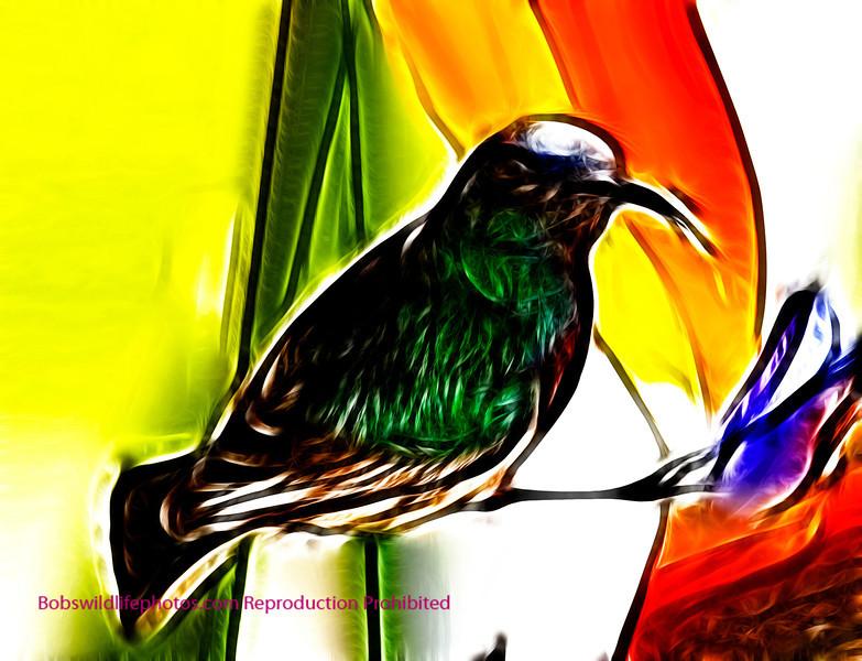 Sunbird in Paradise
