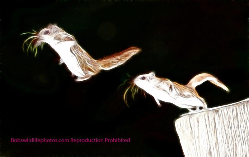 Flying squirel