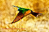Soaring Bee Eater