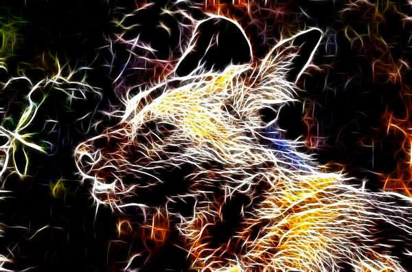 wild dog 4a