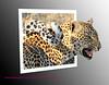 Leopard Sabie Sands 2011_0006a