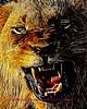 Lion Kruger 2009_0349b