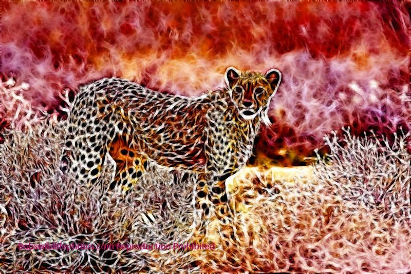 Cheetah Etosha 2009_0674b