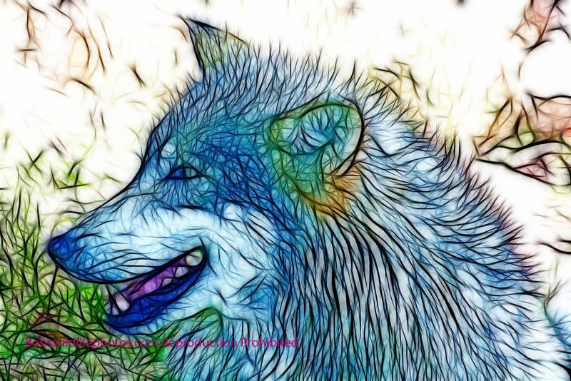 Unknown wolf 1