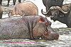 Hippo and water buffalo