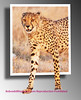 cheetah Etosha 2011 _0096b