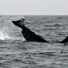 050814 orca mb (1044)_c_e