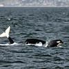 050814 orca mb (341)_c_e