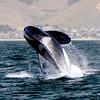 050814 orca mb (266)_rev a_e