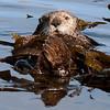 052914 otters (278)_c_e