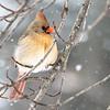 Backyard Birds 2 Feb 2019-9347