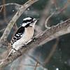 Backyard Birds 2 Feb 2019-9308