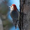 Backyard Birds 2 Feb 2019-9183