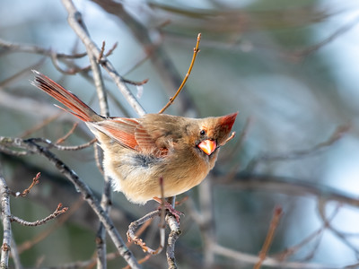 Birds 2 Feb 2019-9511