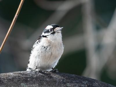 Birds 2 Feb 2019-9500