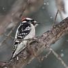 Backyard Birds 2 Feb 2019-9311