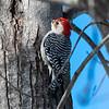 Backyard Birds 2 Feb 2019-9161