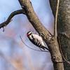 Area birds 3 Dec 17-5693