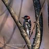 Area birds 3 Dec 17-5670