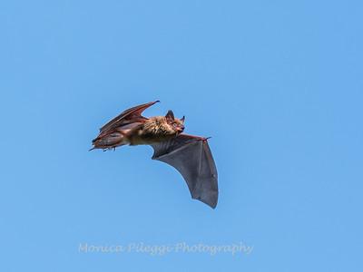 Bat 20 September 2017-8350