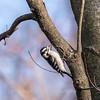 Area birds 3 Dec 17-5692